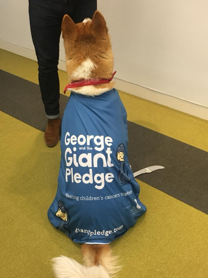 Doggo wearing a cape